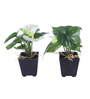 Fourwalls White Synthetic Artificial Anthurium Plant with Vase - Set of 2