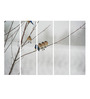 Multiple Frames Printed Birds on tree stems Art Panels like Painting - 5 Frames