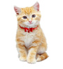 Pawzone Cat Collar Bells in Pink (Set of 2)