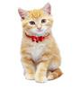 Pawzone Matryoshka Cat Collar Bells (Set of 1)
